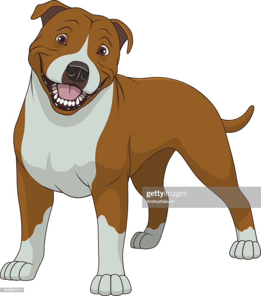 Funny purebred Staffordshire Bull Terrier