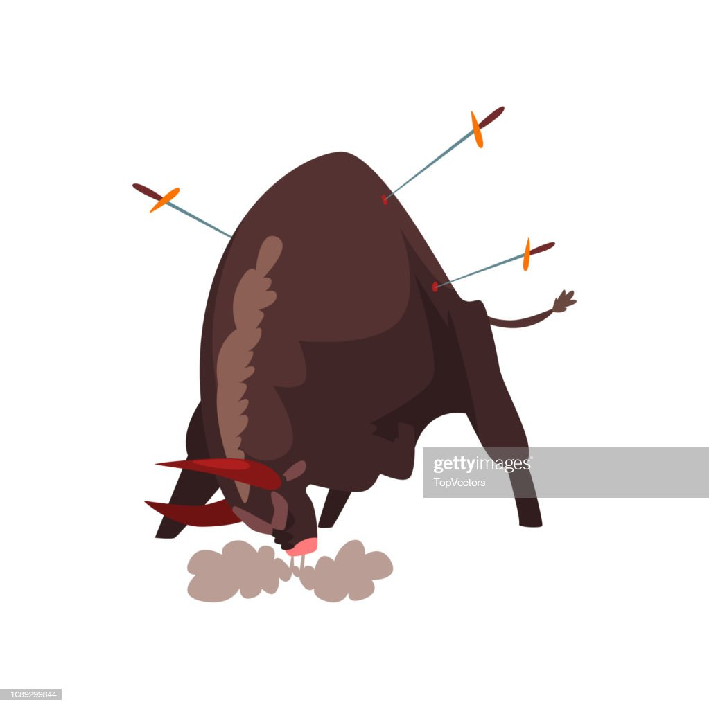 Furious black bull pierced by swords, bullfighting, corrida performance vector Illustration on a white background