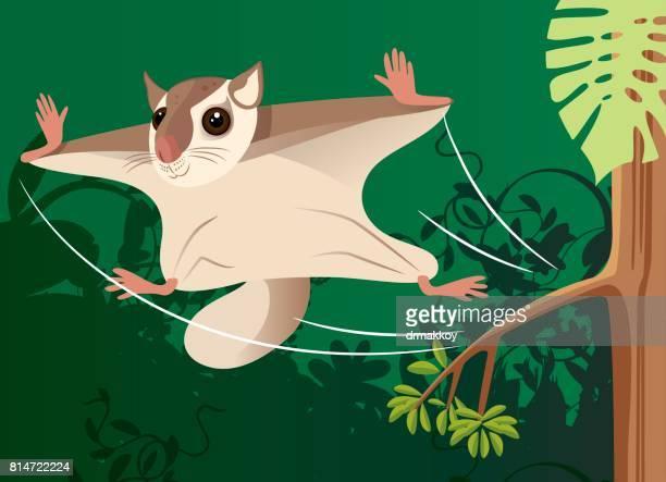 illustrations, cliparts, dessins animés et icônes de flying squirrel - écureuil