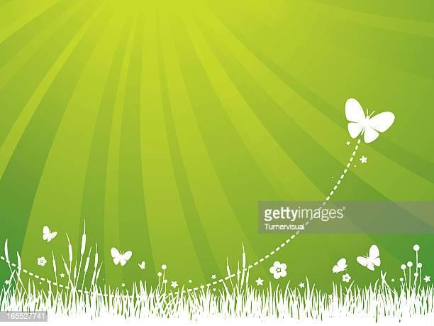 ilustrações, clipart, desenhos animados e ícones de fundo verde jardim - flowerbed