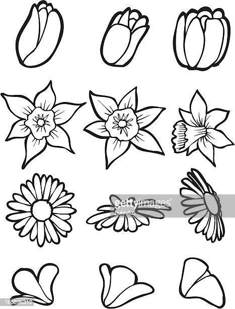 Line Drawing Flower Garden : Påsklilja bildbanker med illustrationer och tecknat