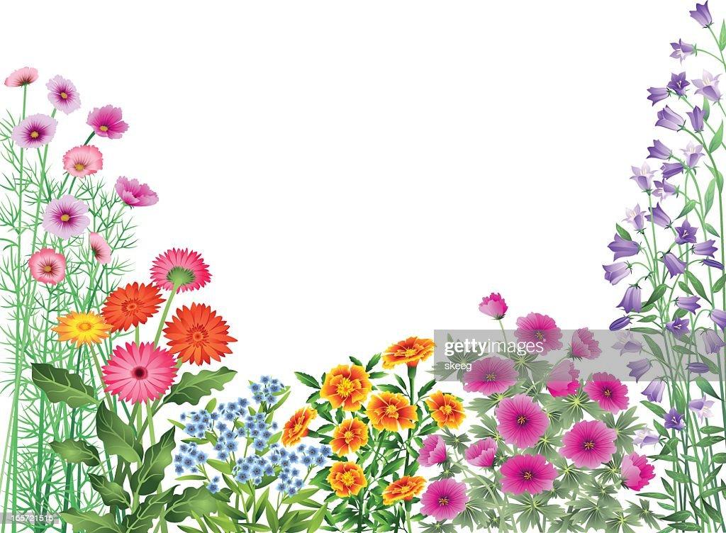 Jardim de flores de fronteira : Ilustração