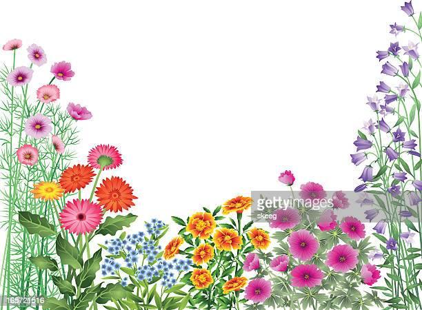 ilustrações, clipart, desenhos animados e ícones de jardim de flores de fronteira - flowerbed