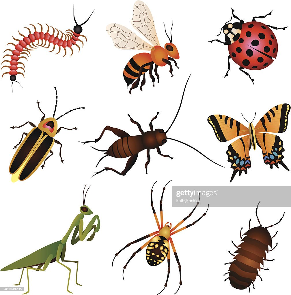 garden insects and creatures : stock illustration