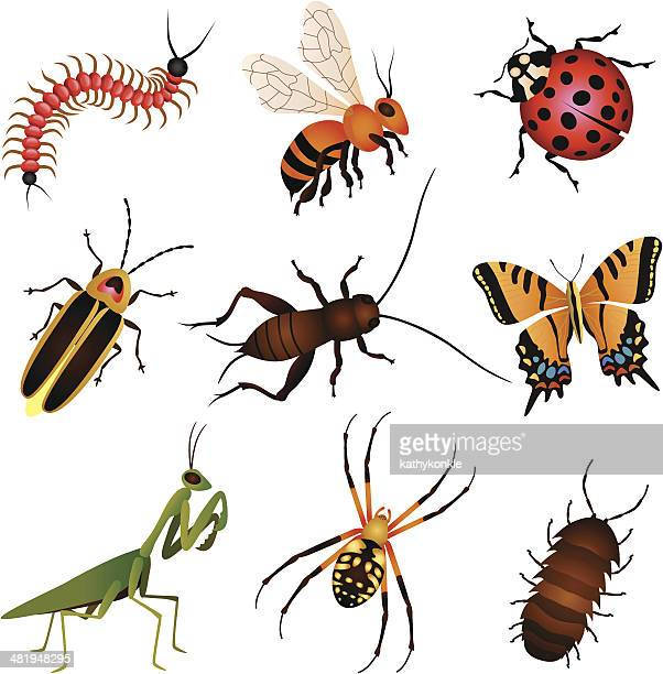 garden insects and creatures - insect stock illustrations