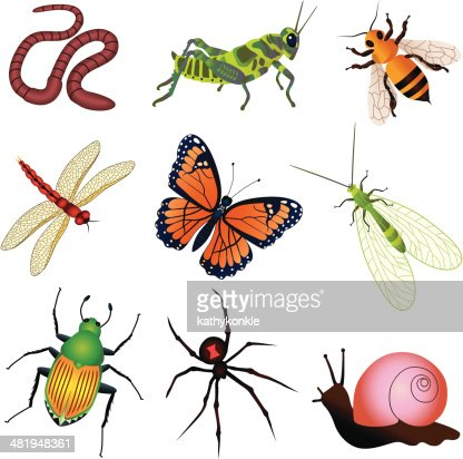 Garden Insects And Creatures Vector Art Getty Images
