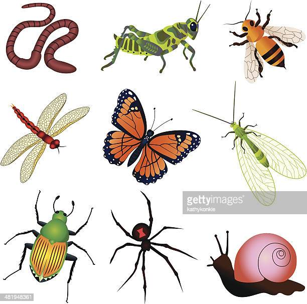 garden insects and creatures - black widow spider stock illustrations, clip art, cartoons, & icons
