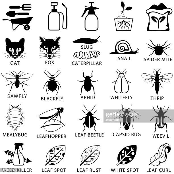 garden pests and plant disease treatment icons - aphid stock illustrations