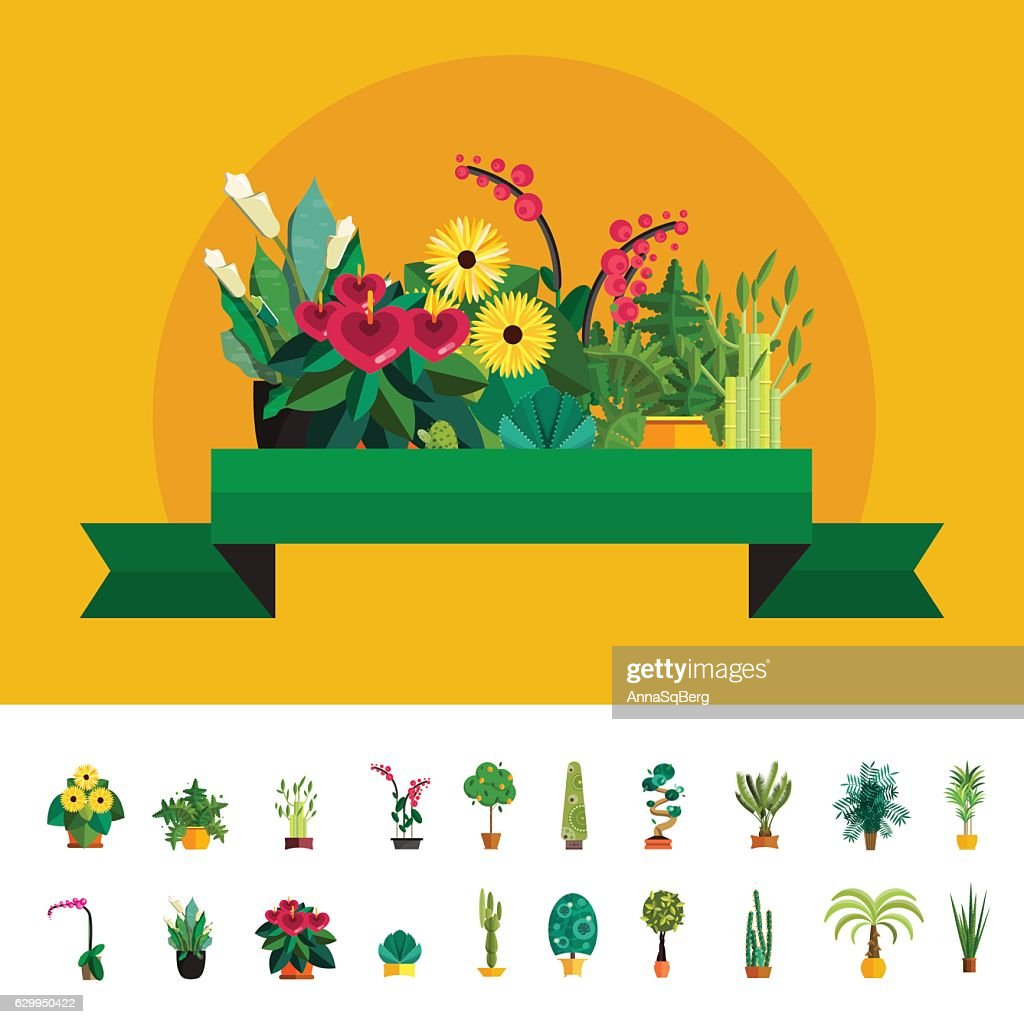 Garden plants, Potted flowers in the  vector illustration