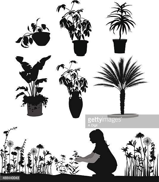illustrations, cliparts, dessins animés et icônes de gardenplants - fleur de pissenlit