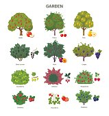 Garden trees and shrubs collection.