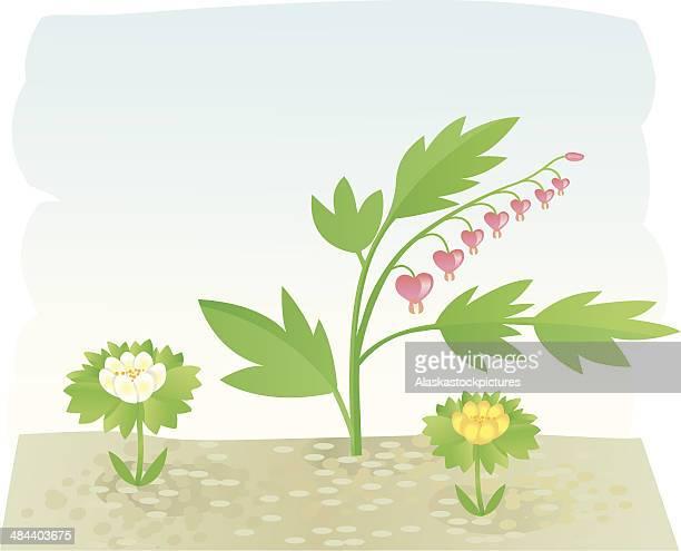 gardenflowers ii. - buttercup stock illustrations, clip art, cartoons, & icons