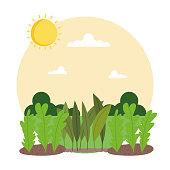gardening planting plants soil sunny day