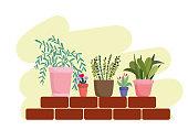 gardening potted plants flowers wall bricks