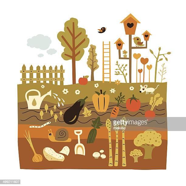 ilustrações de stock, clip art, desenhos animados e ícones de jardinagem - caracol de jardim