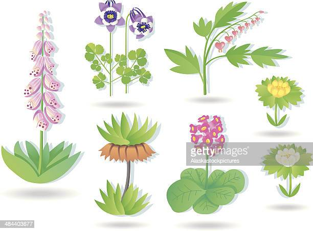 gardenplants collection - ranunculus stock illustrations, clip art, cartoons, & icons