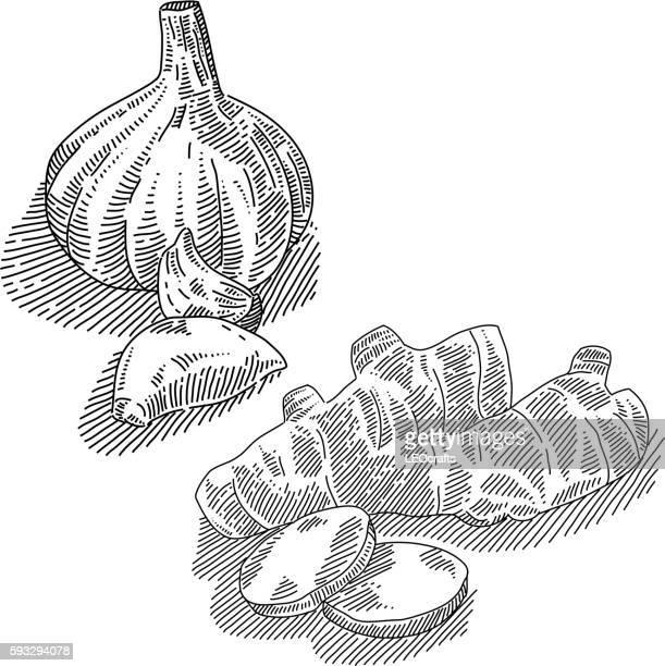 Garlic and Ginger Drawing