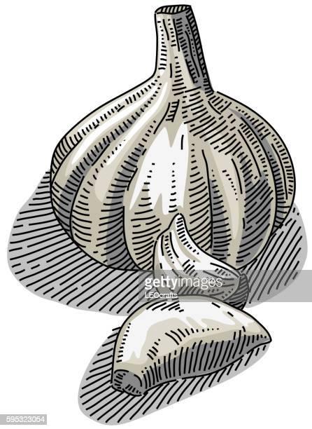 Desenho de alho