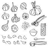 Garlic set. Vector sketch illustration