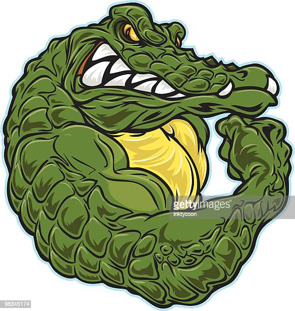 gator flex - alligator stock illustrations, clip art, cartoons, & icons