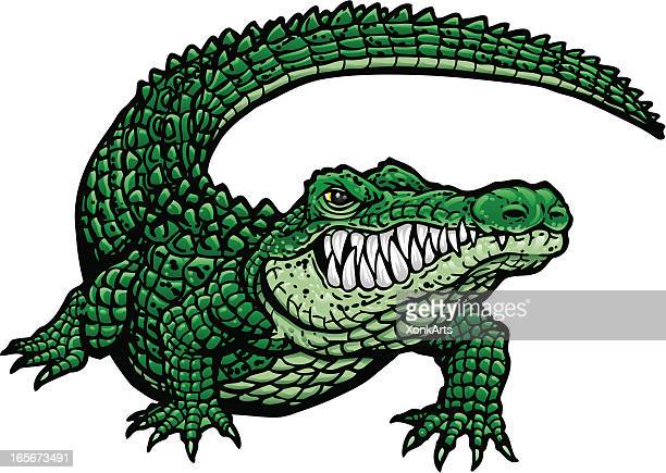 gator g - alligator stock illustrations, clip art, cartoons, & icons