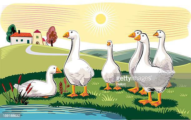 geese in landscape