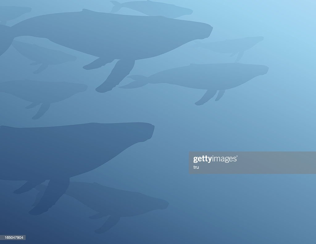 Gentle Giants - Humpbacks : stock illustration