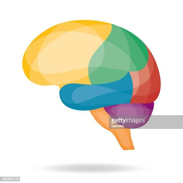 Geometric Brain Region