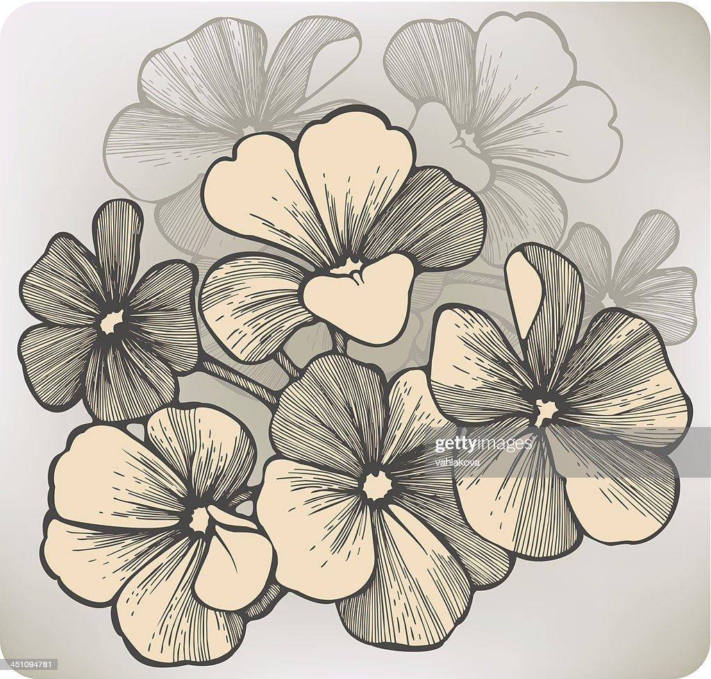 Geranium flower, hand-drawing. Vector illustration.