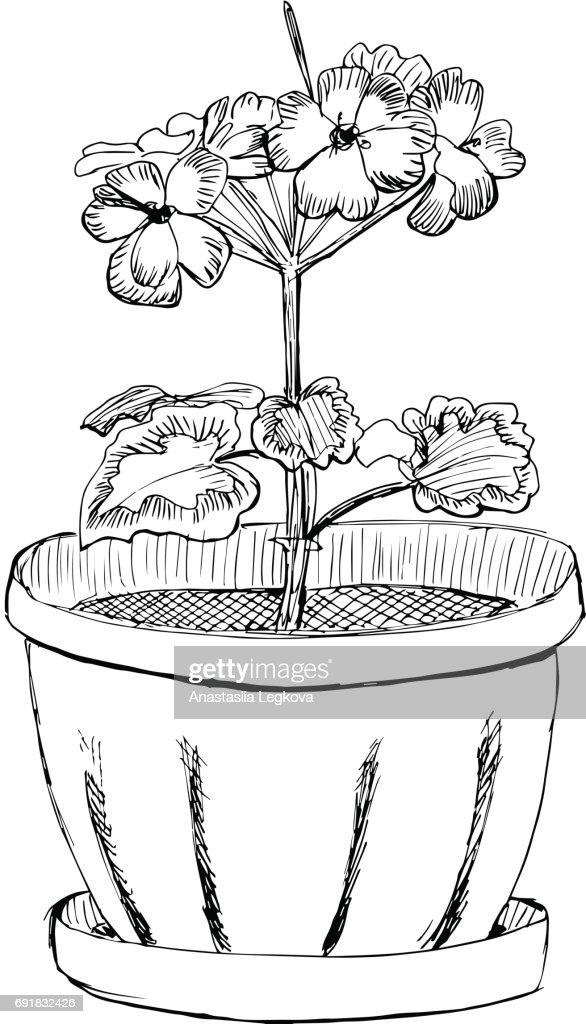 Geranium flower in a pot hand drawn sketch vector illustration