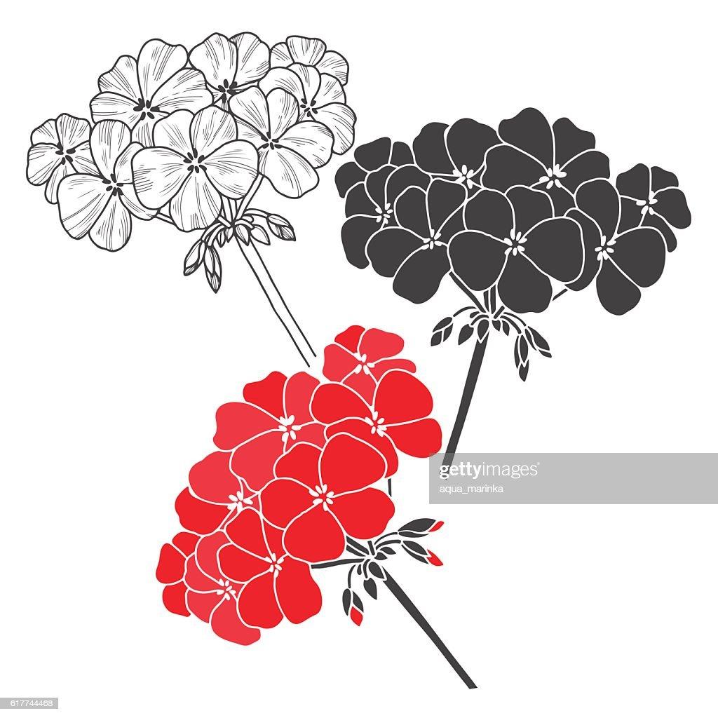 Geranium. Vector floral set on a white background.