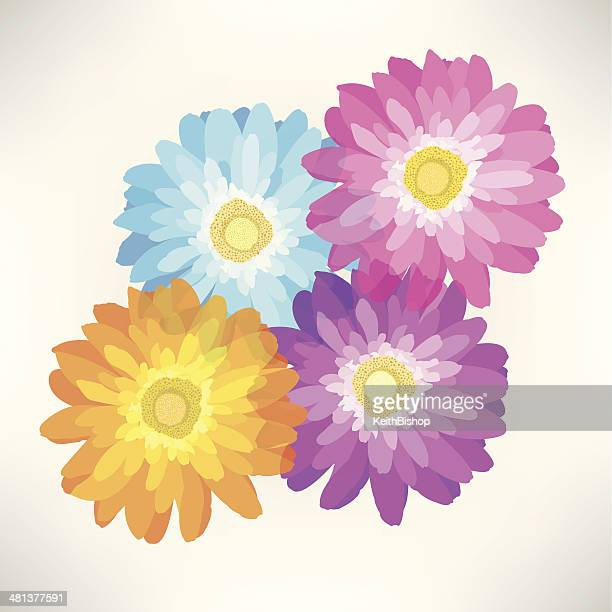 gerber daisy flower - spring season - gerbera daisy stock illustrations, clip art, cartoons, & icons