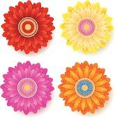 Gerber Daisy Flower - Spring