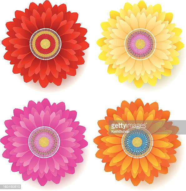 gerber daisy flower - spring - gerbera daisy stock illustrations, clip art, cartoons, & icons