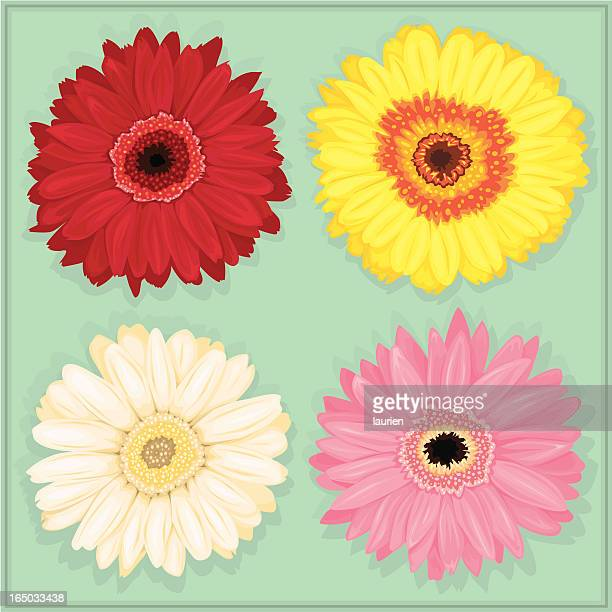gerbera daisies in red, yellow, white and pink. - gerbera daisy stock illustrations, clip art, cartoons, & icons