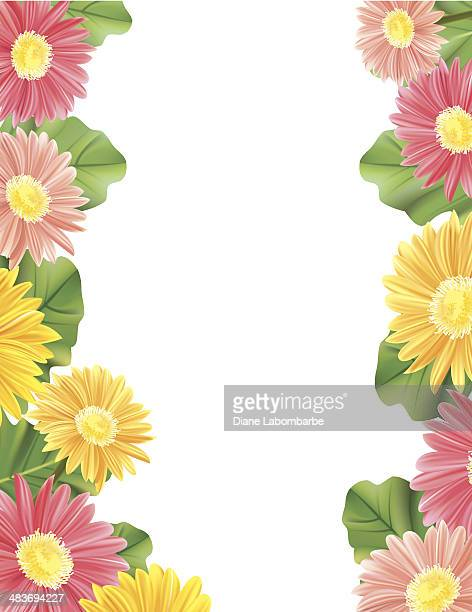 gerbera daisy border with copy space - gerbera daisy stock illustrations, clip art, cartoons, & icons