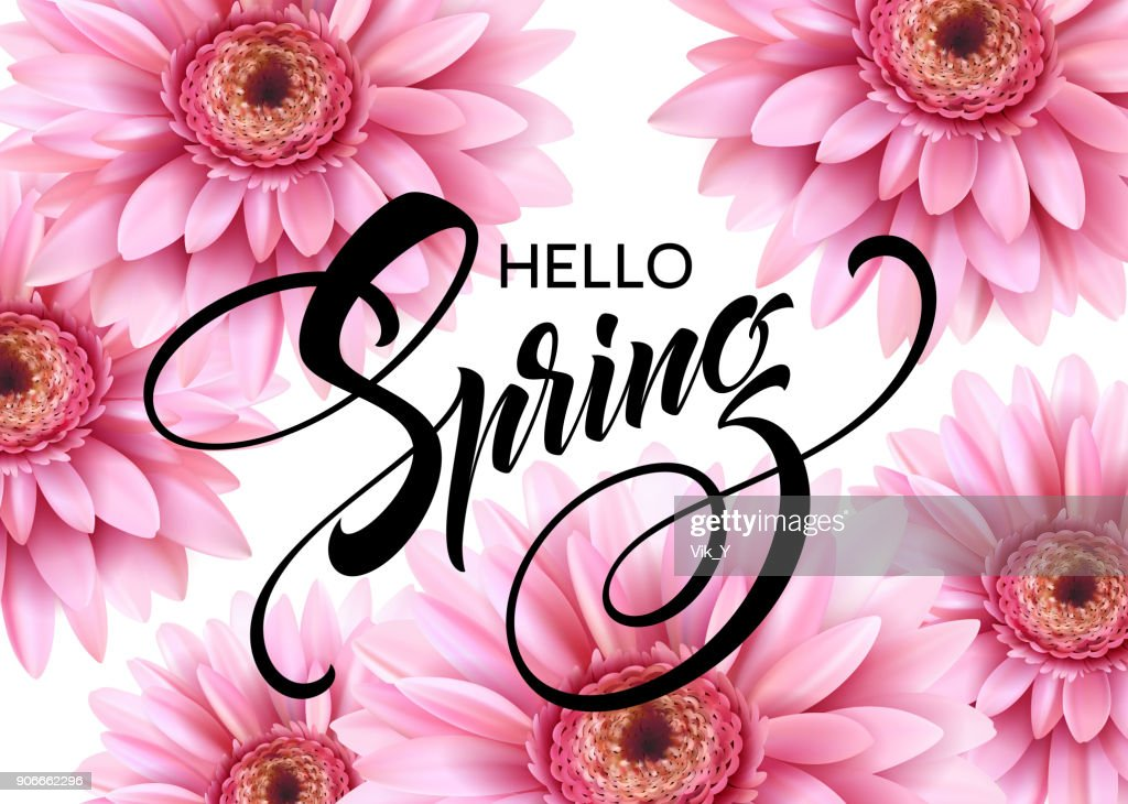 Gerbera Flower Background and Hello Spring Lettering. Vector Illustration