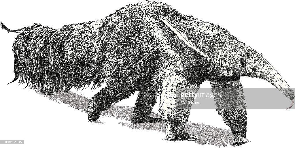 Giant Anteater : stock illustration