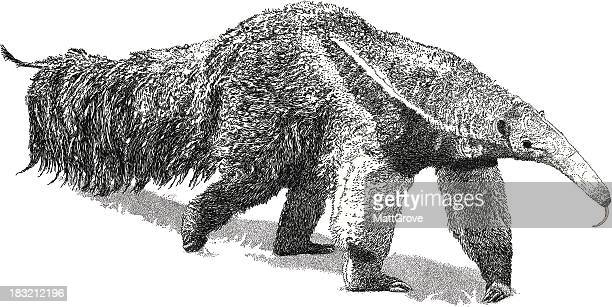 giant anteater - giant anteater stock illustrations
