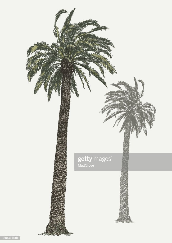 Giant Palm Tree