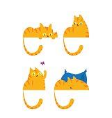 Ginger cat in four different behaviors