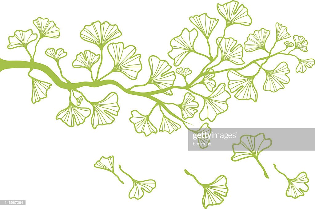ginkgo branch with leaves, vector