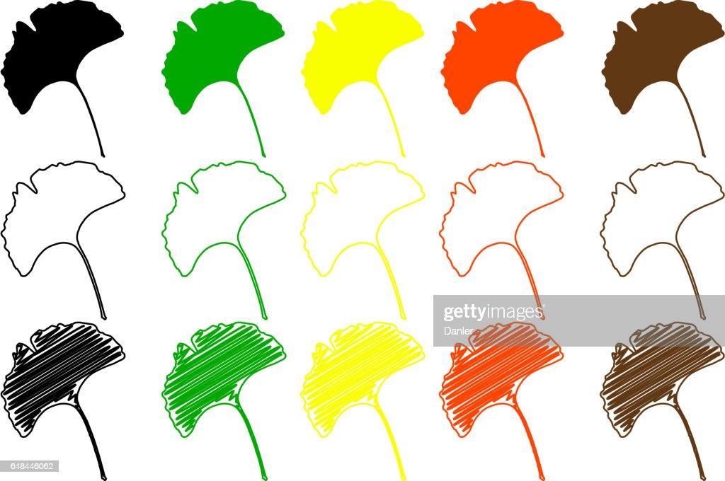 ginkgo leaf color set