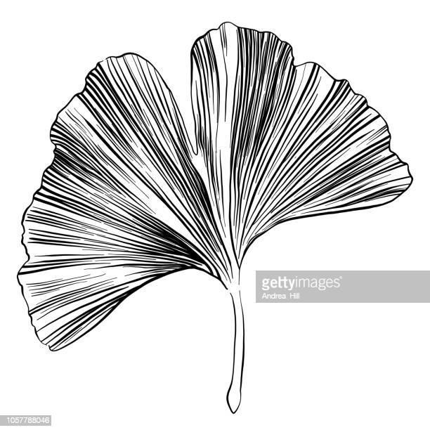 イチョウ葉のスケッチのベクトル図 - 漢方薬点のイラスト素材/クリップアート素材/マンガ素材/アイコン素材