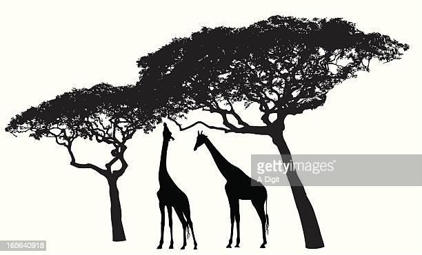Giraffe Habitat Vector Silhouette