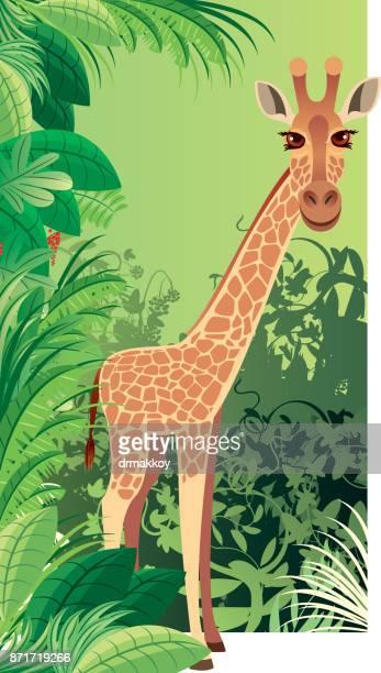 giraffe - cartoon characters with big noses stock illustrations, clip art, cartoons, & icons