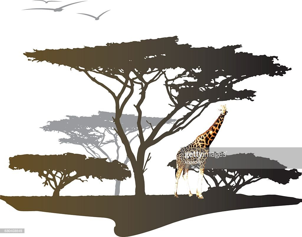 Giraffe with silhouette of tree