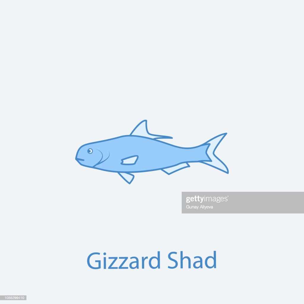 gizzard shad 2 colored line icon. Simple light and dark blue element illustration. gizzard shad concept outline symbol design from fish set