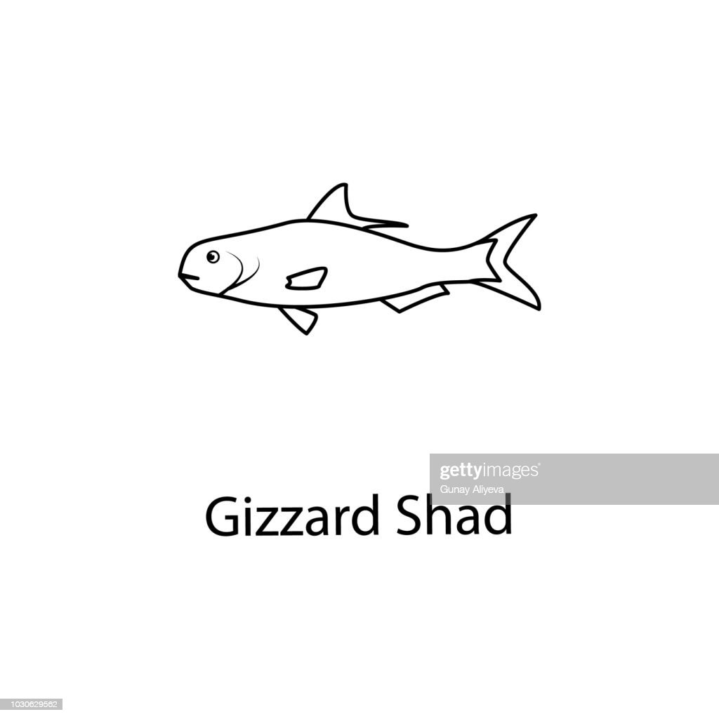 gizzard shad icon. Element of marine life for mobile concept and web apps. Thin line gizzard shad icon can be used for web and mobile. Premium icon