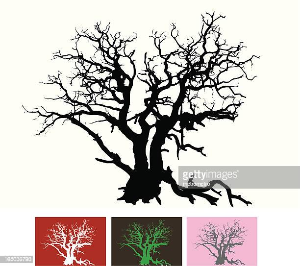 gnarled tree - rotting stock illustrations, clip art, cartoons, & icons